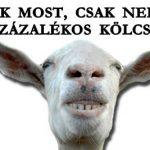 CSAK MOST, CSAK NEKED! 0 SZÁZALÉKOS KÖLCSÖN!